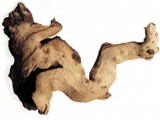 Bogwood For An Aquarium