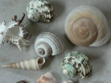 Shells For An Aquarium