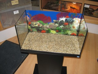 Placing Backing On Aquarium