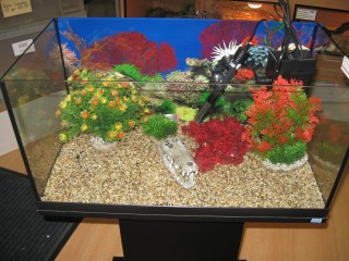 Adding Aquarium Decorations