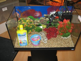 Essential Aquarium Accessories