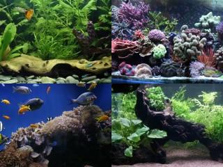 Different Aquarium Environments